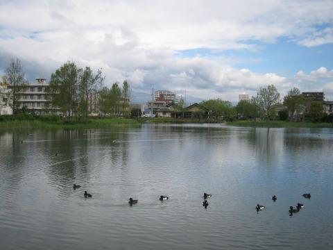 中郷温水地眺望です。
