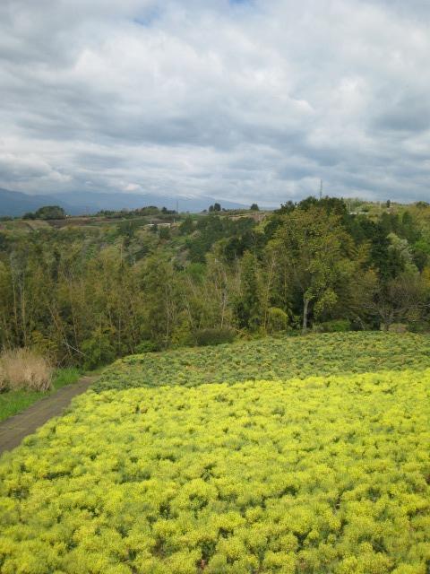 坂公民館からの眺望です。
