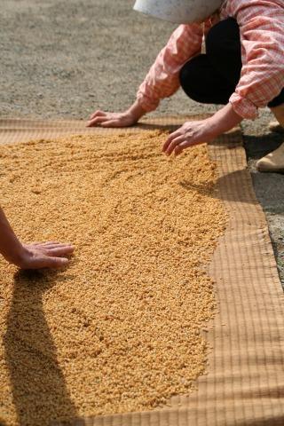 米粒を乾かすの図