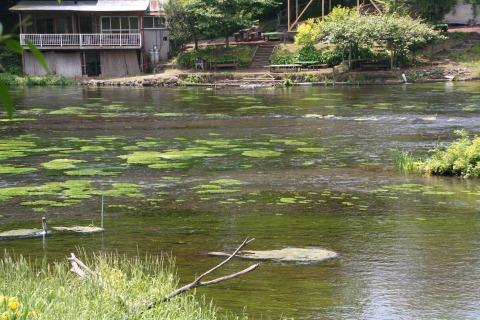 柿田川の水はすべて湧水。