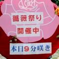 700種類のバラが咲き乱れる村