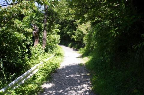 香貫山の道(山頂手前で舗装路に)